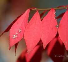 Ancient Autumn Message by Terry Aldhizer