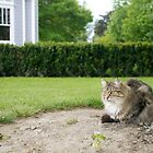 Guard Cat, Old Saint Mary's Convent, Blenheim, NZ by johnrf