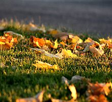 Separating the Seasons - Waterford, Connecticut by Kristy-Lyn Faircloth