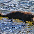 'Walter the Water Dog' by Scott Bricker