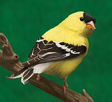 Perched Finch by Ian Moreland