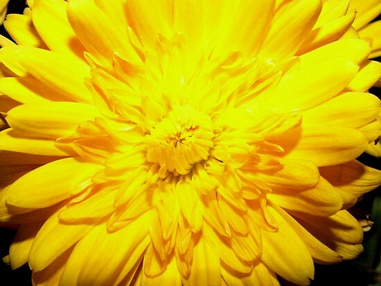 Bright Yellow Mum by DreamBigInk1