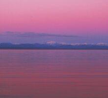 Fuchsia Skies by Gail Bridger