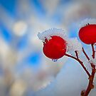 First snow by deahna