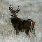 3 main beam buck by Rodney55