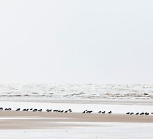 Wading birds on the tideline by wildscape