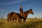Pic Willetts - Packhorse Drover by Carmel Williams