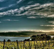 Rosevears Vineyard at Dawn - Tasmania, Australia by Joshua Freeman