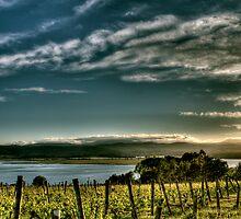 Rosevears Vineyard at Dawn - Tasmania, Australia by Joshua Freeman