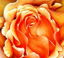 Orange Frilly by Kristina K