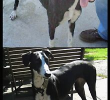 Before and after - the Story of galgo Iola by homesick