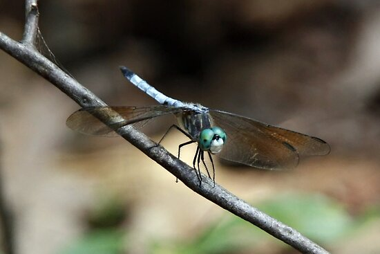 Dragonfly by KerrieLynnPhoto