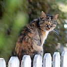 Little Kitty by Barbara Anderson
