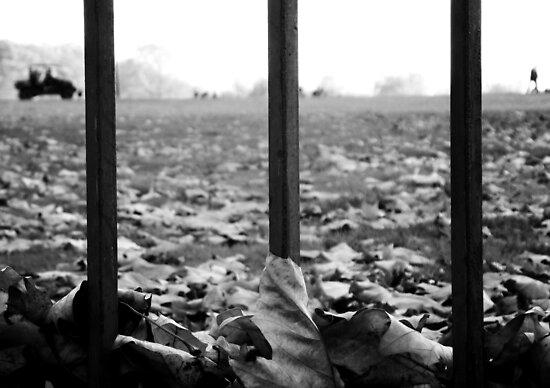 November. by Mojca Savicki