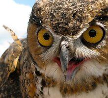 Stanley the owl native to Michigan by Julie  Davison