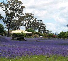Sunny Brae Farm --   NSW   Australia by shortshooter-Al