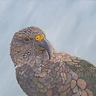 Looking at you - kea by Pam Buffery