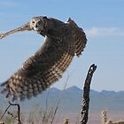 Great Horned Owl ~ 6mo Juvenile by Kimberly Chadwick