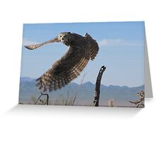 Great Horned Owl ~ 6mo Juvenile Greeting Card