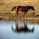 A Horse of a Common Color by Terence Russell