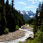 Gold Rush Creek by Josephine Beedle