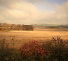 Sunsplashed Fields by GlennB