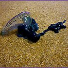 Portuguese Man-O-War by Keith Richardson