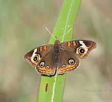 Buckeye Butterfly On Blade by Terry Aldhizer