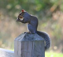 Squirrel On Wood Post by Terry Aldhizer