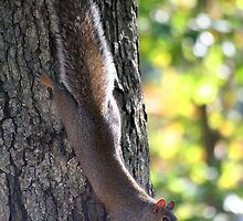 Squirrel With Nut by Terry Aldhizer