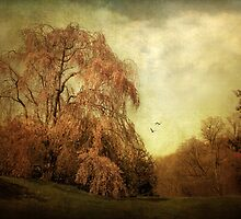 Weeping Cherry by Jessica Jenney