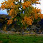 Country tree showing off  by sgarrityphotogr