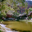 Australian waterhole by apple88