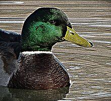 Swimming Pond Friend  by David Dehner