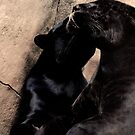 Black Panther Caress by evilcat