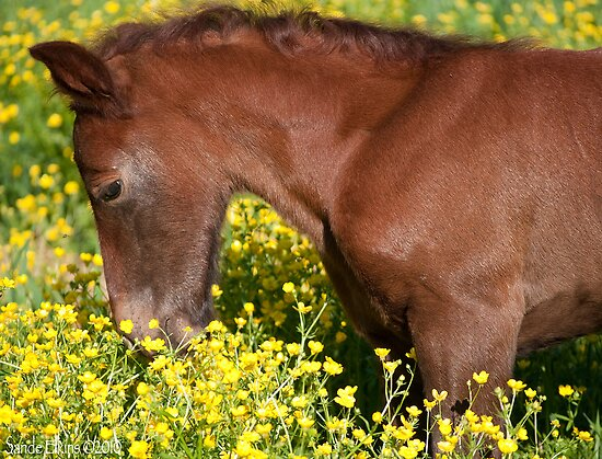 Please Don't Eat the Buttercups by GrayHorseDesign
