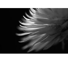 ~angel's wing~ Photographic Print