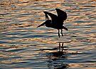 Brown Pelican by Michael  Moss