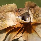 Frilled Neck Lizard by Steve Bullock