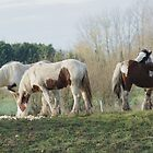 Who's Horses anyway !!!! by William G  Watson