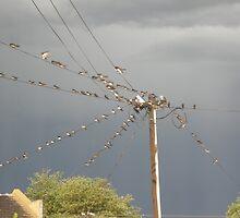 birds on a wire by desmondvh
