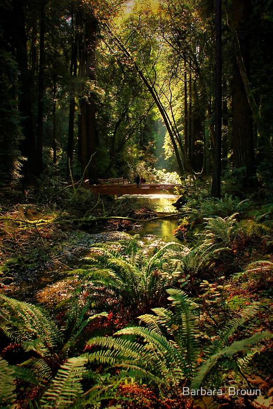 Along Fern Creek by Barbara  Brown