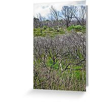 starkness Greeting Card