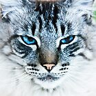 Blue Eyed Cat by Buckwhite