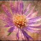 Textured Aster by Lois  Bryan