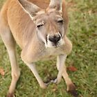 Skippy! by Steve Bullock