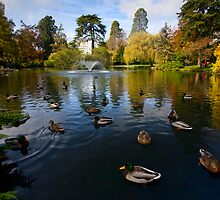 Duck Pond by Don Guindon