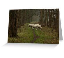 Sheep on the dike Greeting Card