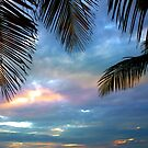 Palm Courtains by Susanne Van Hulst