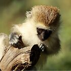 Monkey Perch by digsy